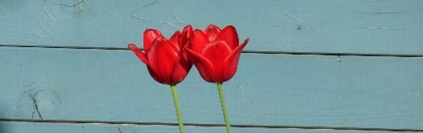freundschaft wird liebe gedicht